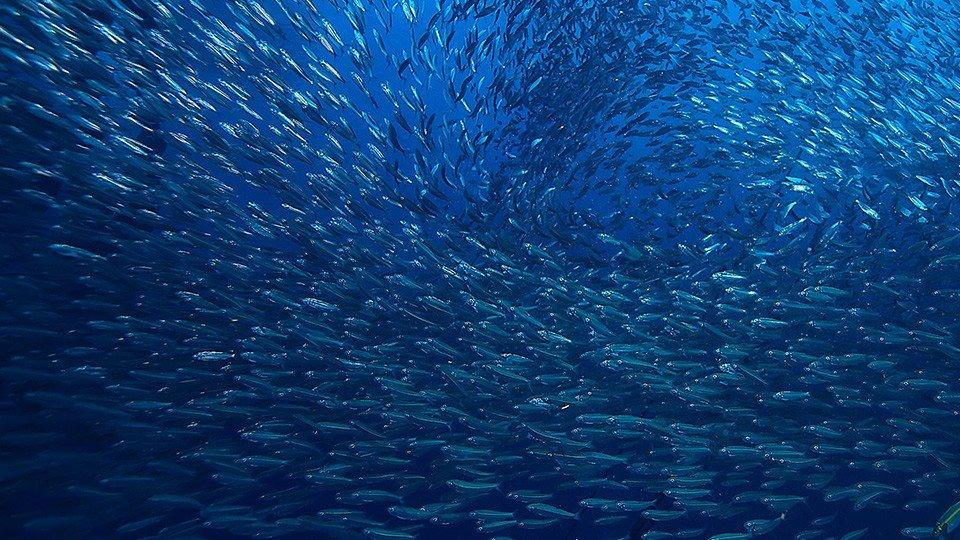 Circular Tanks in Live Fish Carriers